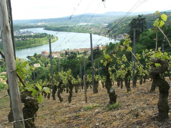 Like many vineyards in the extreme north of the Rhône Valley, the aspect of the Condrieu plots is quite something to behold.
