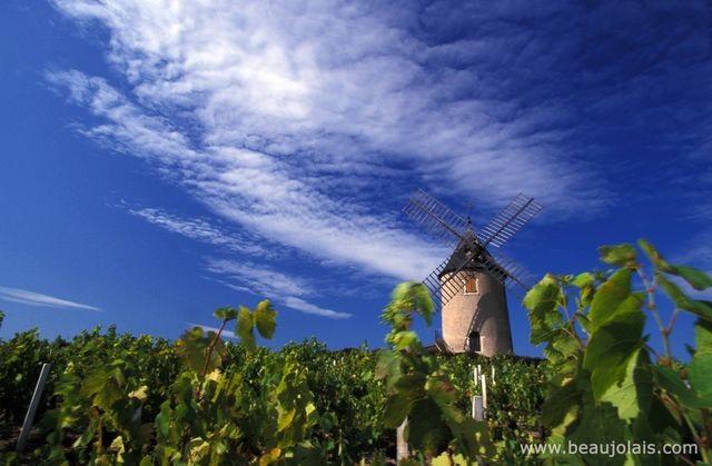 Moulin a Vent Beaujolais