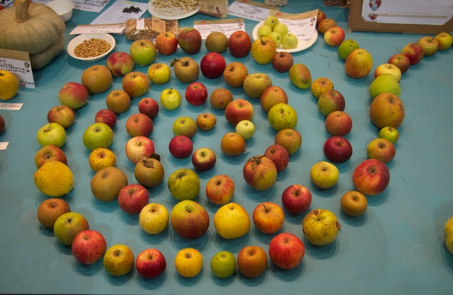 Slow Food Apples at Terra Madre
