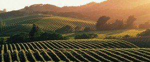 napa-valley-wine-country-600x250