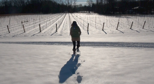 The Beamsville Bench Vineyards of Thirty Bench covered in snow.
