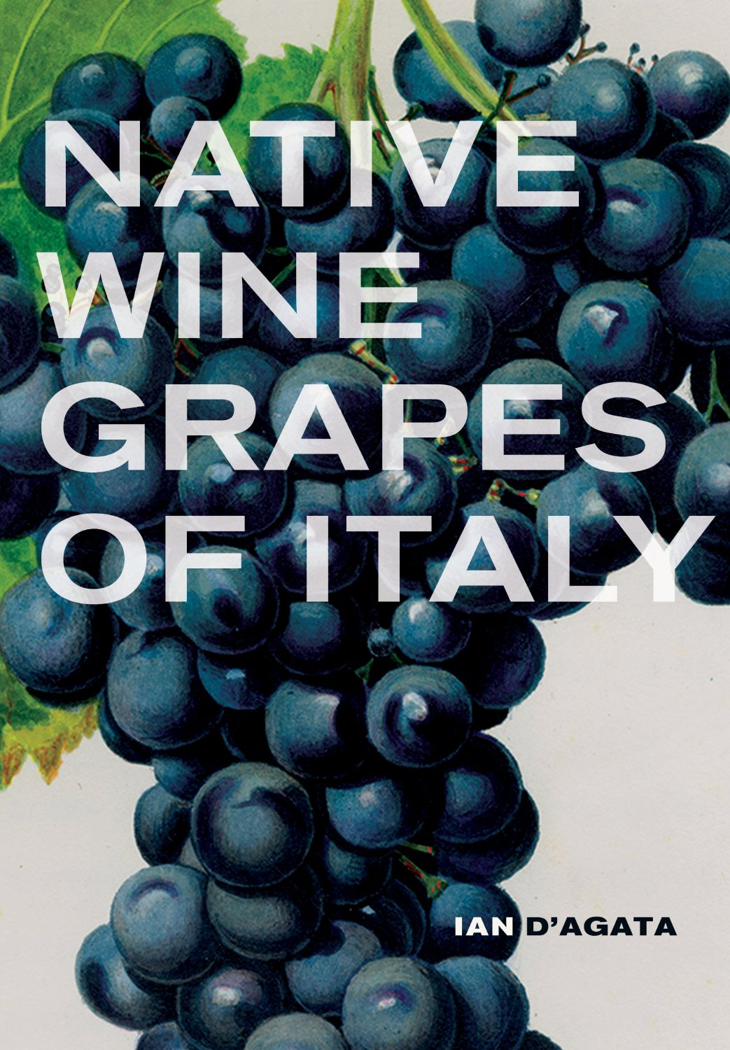 Native Wine Grapes Of Italy D'Agata