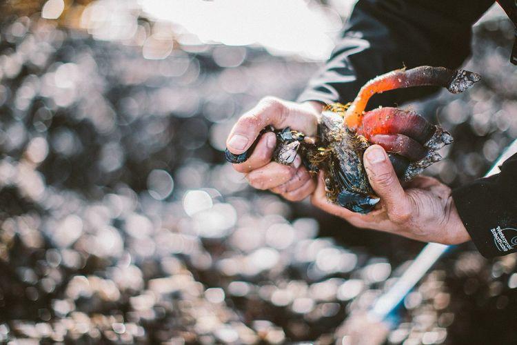 Photo credit: Ha'oom Nuu-chah-nulth Wild Seafood