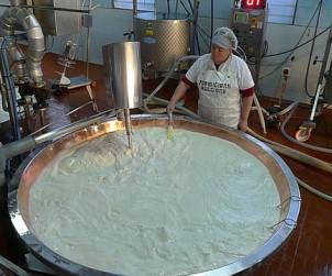 Making Parmigiano Reggiano in Emilia-Romagna