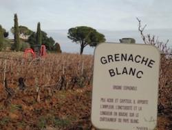 Grenache Blanc sign 302