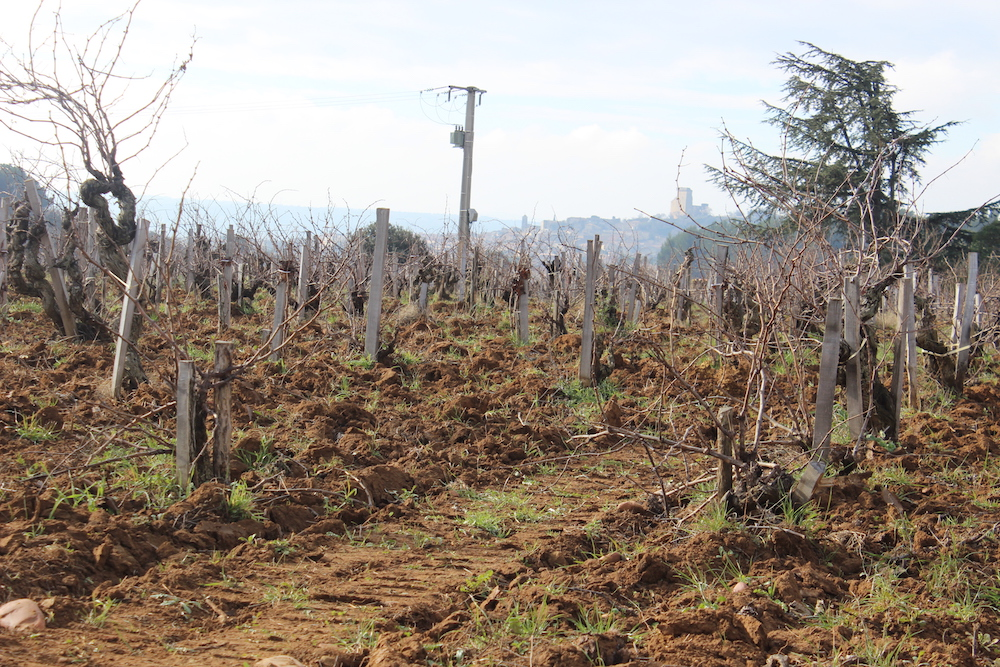 Sandy soil in the vineyards at Château Nalys with the tower of Châteauneuf-du-Pape in the distance.