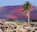 Canary Islands 302