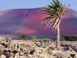 Canary Islands 302