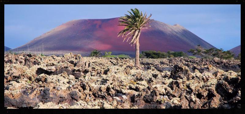 Canary Islands Shot