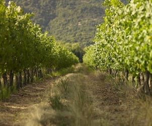 Junat vineyard