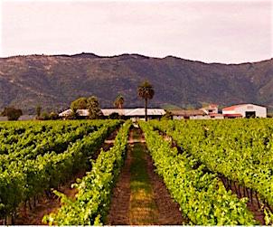 Junta winery 302