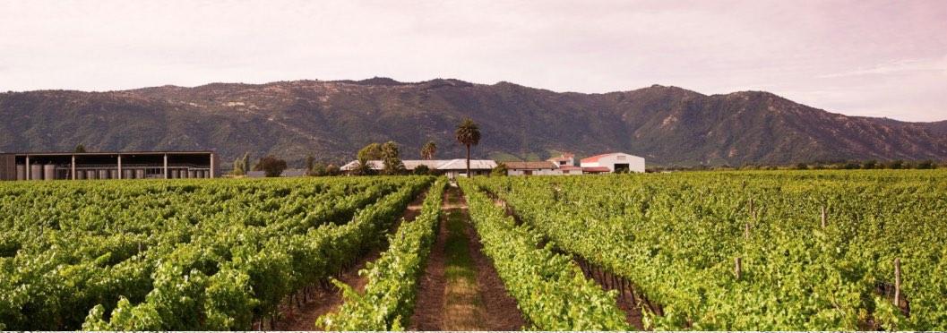 Junta winery