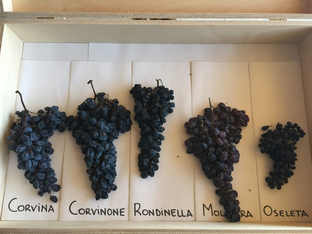 A look at the main varietals of Amarone.