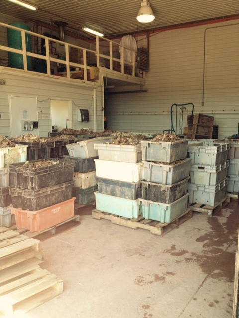 Boxes of oysters arrive at Howard's Cove.