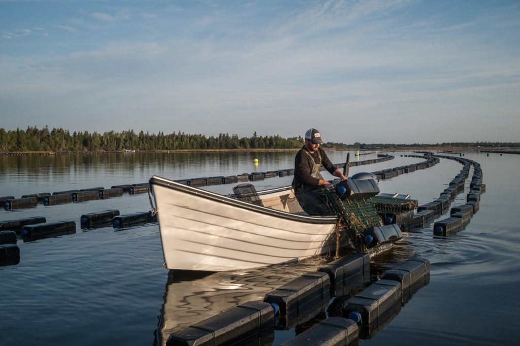 Floating cage oysterculture in Cascumpec Bay, Prince Edward Island. Photo credit : Heather Ogg