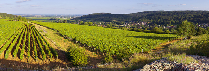The beautiful rolling hillside vineyards of Savigny-Lès-Beaune, Bourgogne.