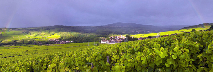 The source of some serious magic... the vineyards of the Maranges appellation.