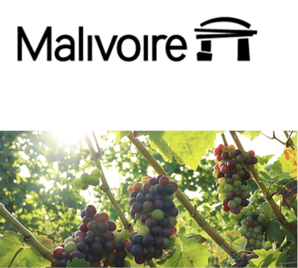 Malivoire harvest