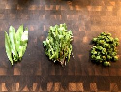 Ramps, dandelions, and fiddleheads... what a veritable feast from the forest's spring bounty!