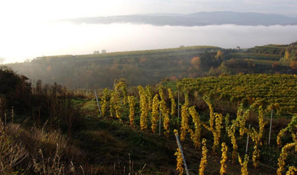 Nikolaihof vineyards in Wachau